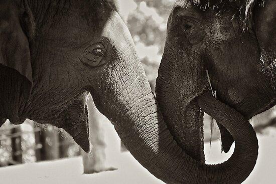 Friendship (Elephants) by Mitchins