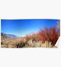 Winter Desert Colors Poster