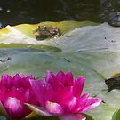 Frog on lily pad by NATURES FINEST MOMENTS