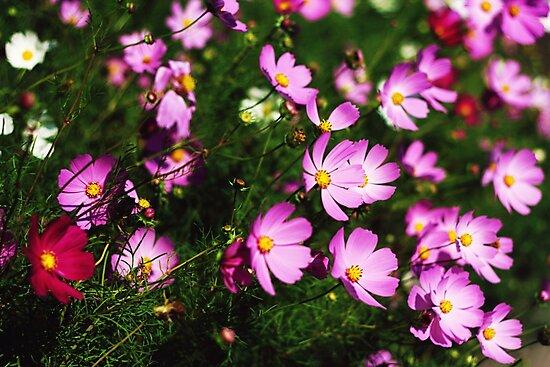 Wildflowers by Susan Drysdale