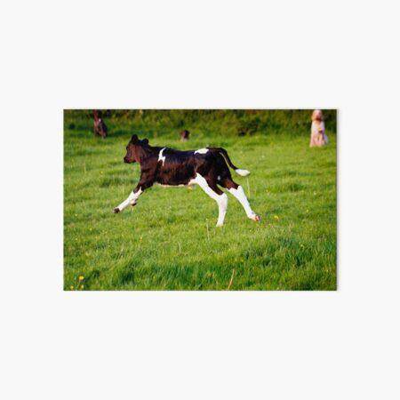 The Galloping Calf Art Board Print