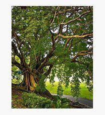 Bodhi Tree Photographic Print