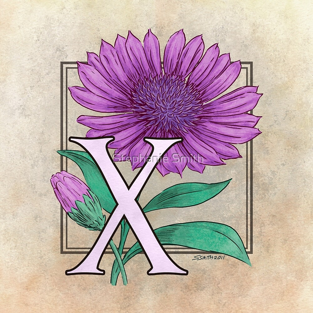 X is for Xeranthemum by Stephanie Smith