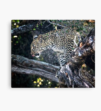 Watching The Action Canvas Print