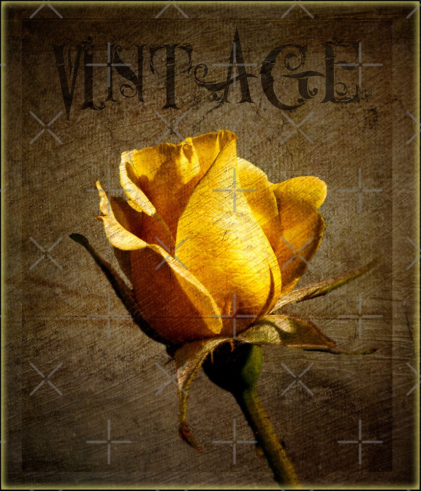 Textured Vintage Rose by alan tunnicliffe