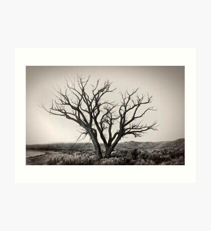 Old Washoe tree #1 Art Print
