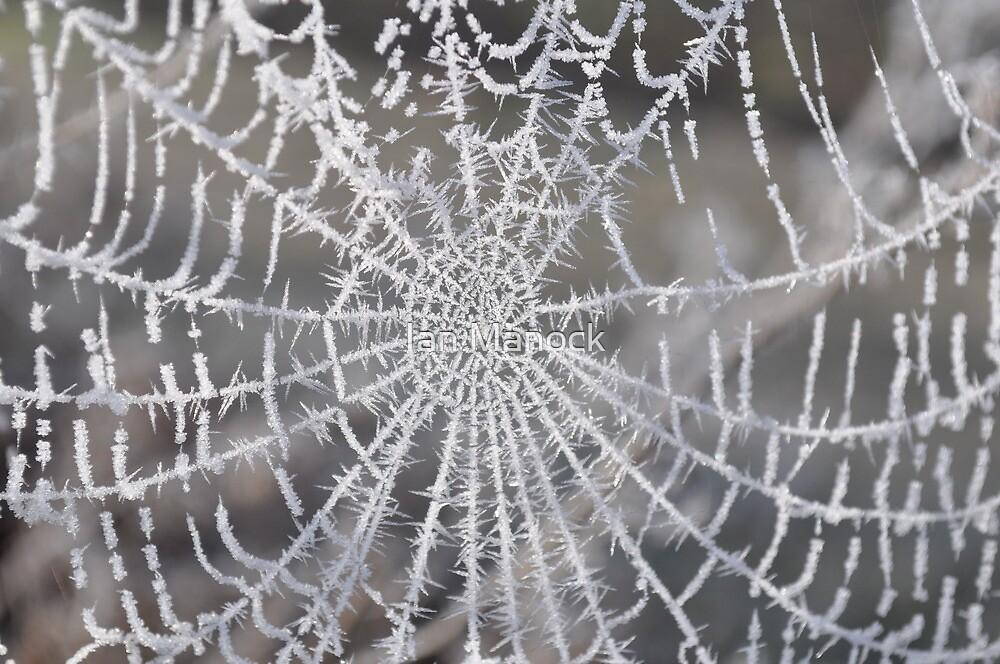 Winter Web by Ian Manock