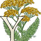 Y is for Yarrow floating by Stephanie Smith