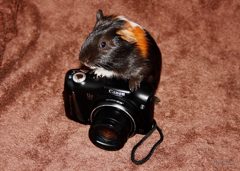 Tia the Photographer by AnnDixon