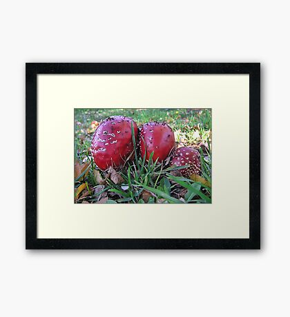 Lovely to photograph, delightful to behold, but eat it and you will never grow old. Framed Print