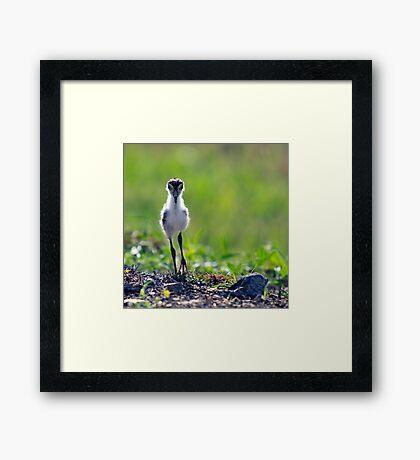The Chick Framed Print
