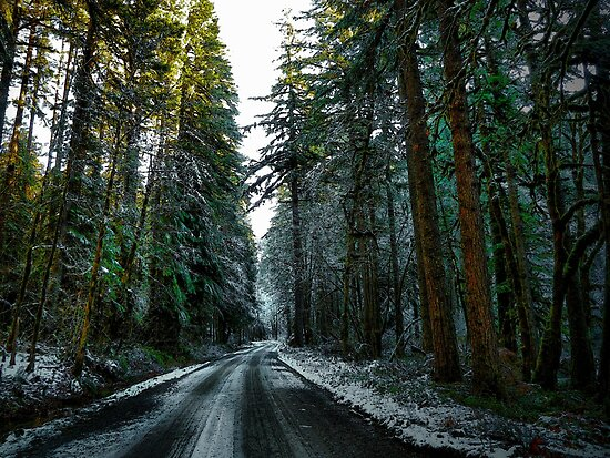 All Roads End At Home by Charles & Patricia   Harkins ~ Picture Oregon