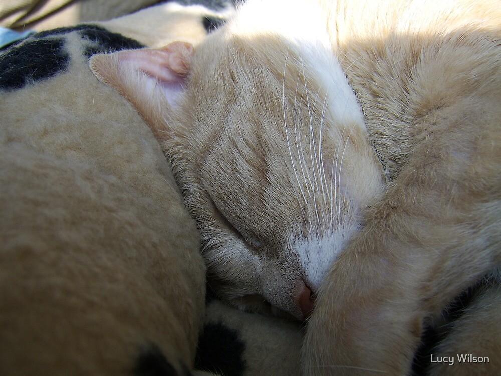 Sleeping Beauty by Lucy Wilson