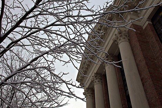 Harvard Yard by Susan Drysdale