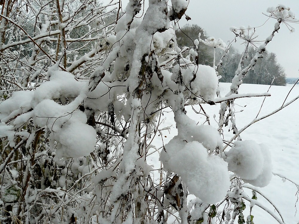 Snow by oldfred