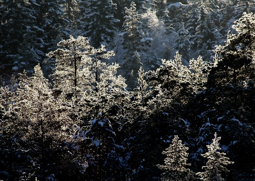17.1.2013: Forest and Winter Day by Petri Volanen