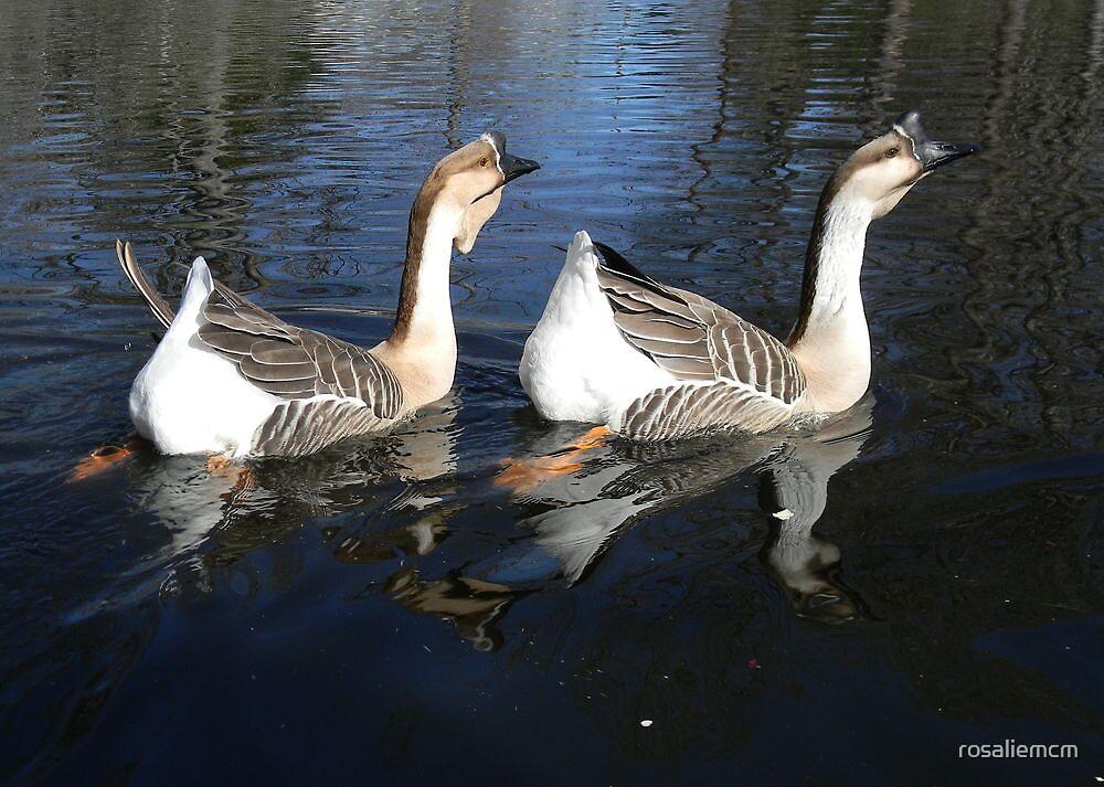 Geese by rosaliemcm
