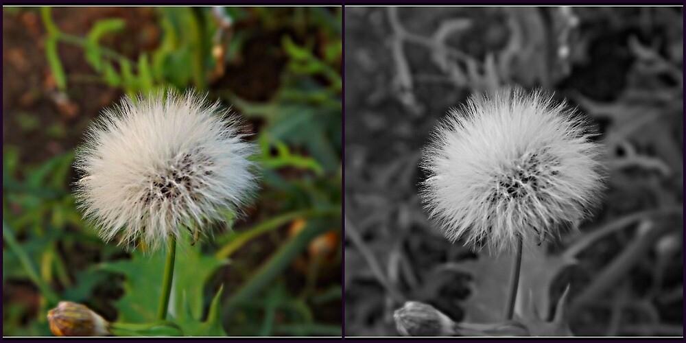 flower black white by thanosgreece