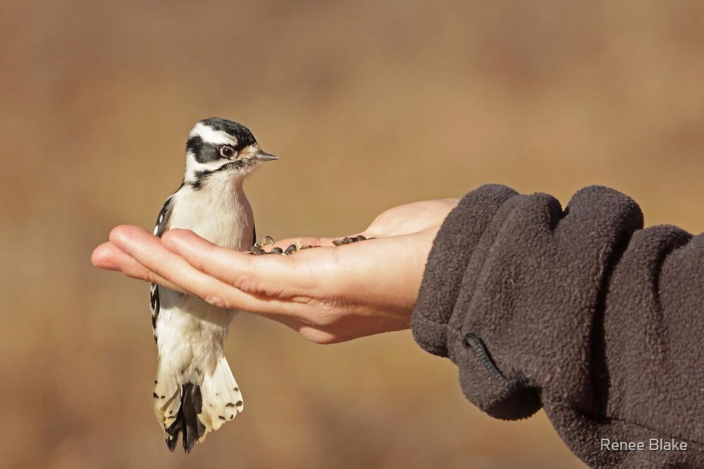 The Brave Little Woodpecker ~ by Renee Blake