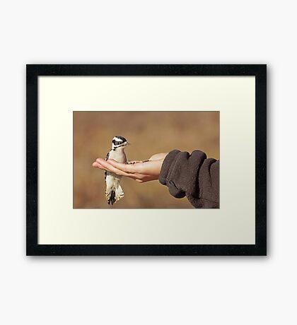 The Brave Little Woodpecker ~ Framed Print