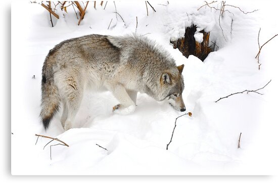 A wolf's tender moment... by Poete100