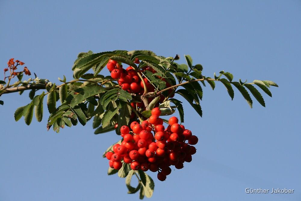 Berries by Günther Jakober