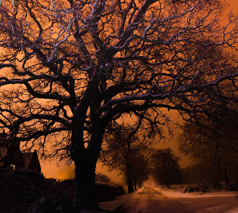Long exposure oak tree  by simon17