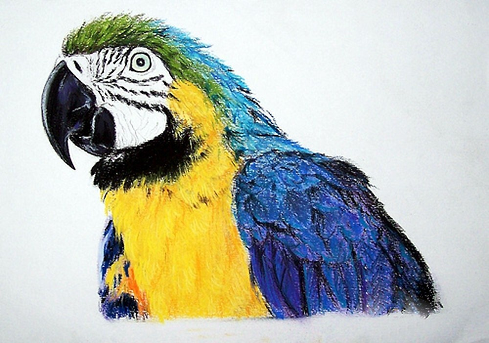 Blue And Yellow Amazon Parrot Bird Poster, Print & Card\