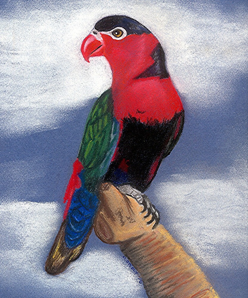 Black Capped Lory Bird Poster Print & Card by Oldetimemercan