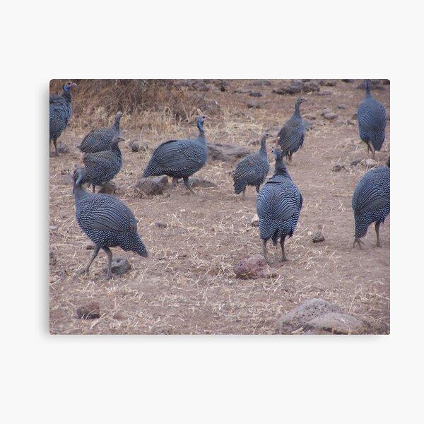 Guinea fowl, Kenya Canvas Print