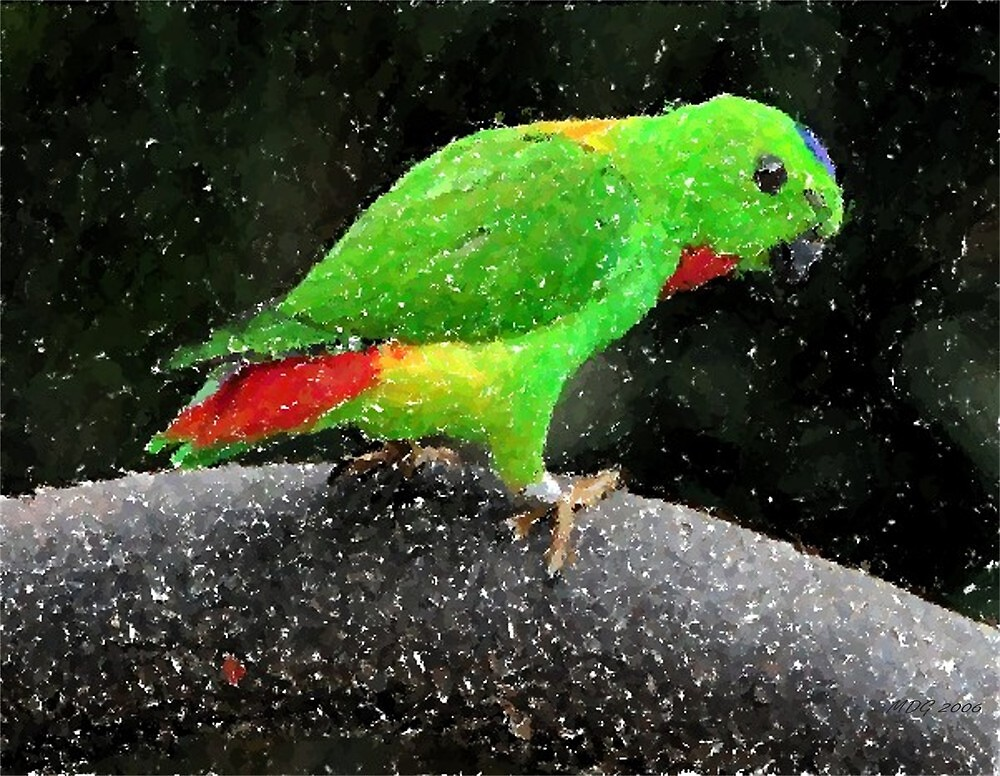 Blue Crowned Hanging Parrot Bird Poster Print & Card by Oldetimemercan