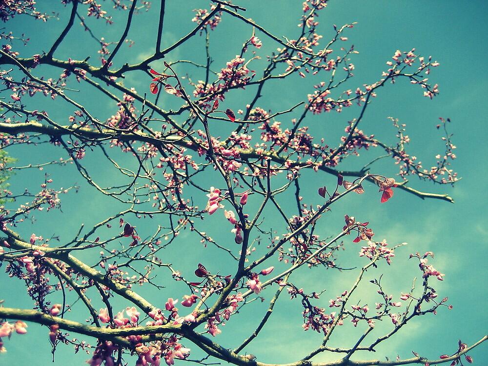Spring by magdabrancato