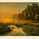 Golden mist, Dambrasca Maine by Dave  Higgins