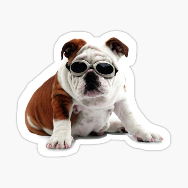 Bulldog in Sunglasses Print Sticker