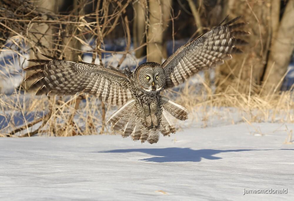 Early bird by jamesmcdonald