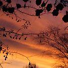 SC Sunset 002 by Stefanohbody