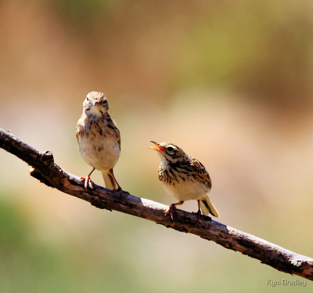Australian Pipit with baby 1 of 2 by Kym Bradley