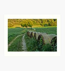 Tennessee Soy Field with Hayrolls Art Print