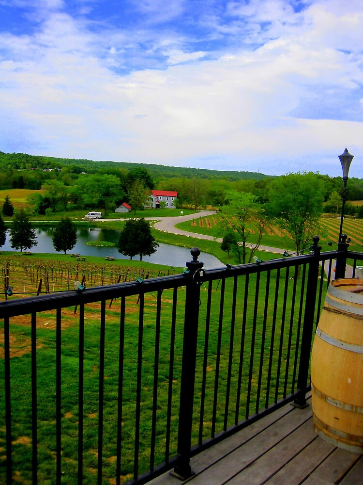 Vineyard Summer by LaurelMuldowney