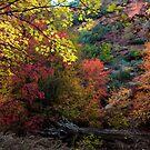 Autumn Gratitude by Thomas Dawson
