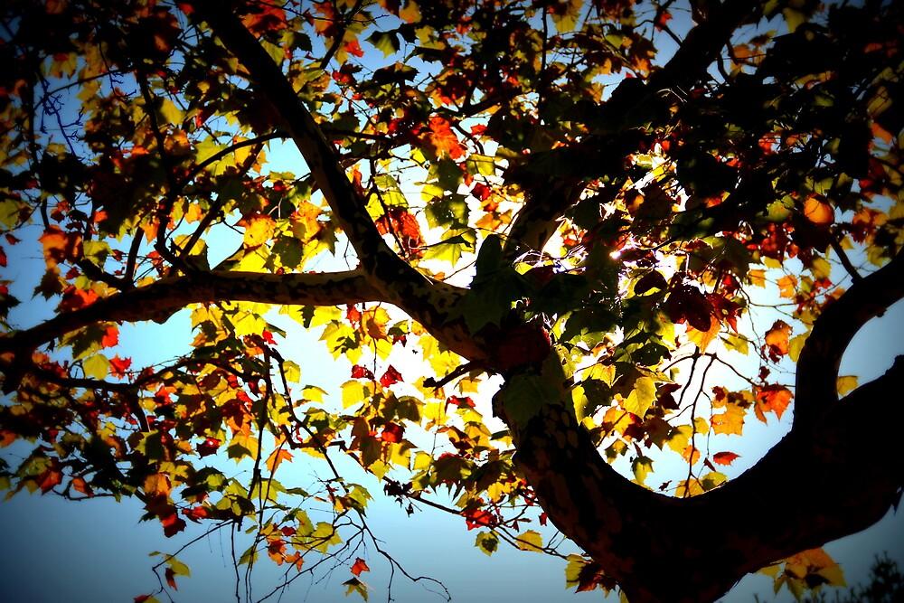 Tree by magdabrancato