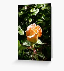 Pretty Petal: Hamilton Gardens, New Zealand Greeting Card