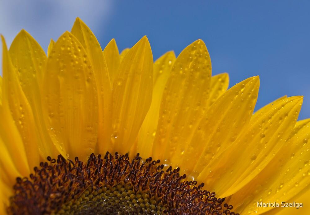 Sunny Flower by Mariola Szeliga
