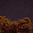 Midnight Garden by KatieMay