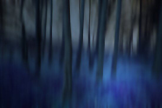 THE BLUE WINTER WOODS by leonie7