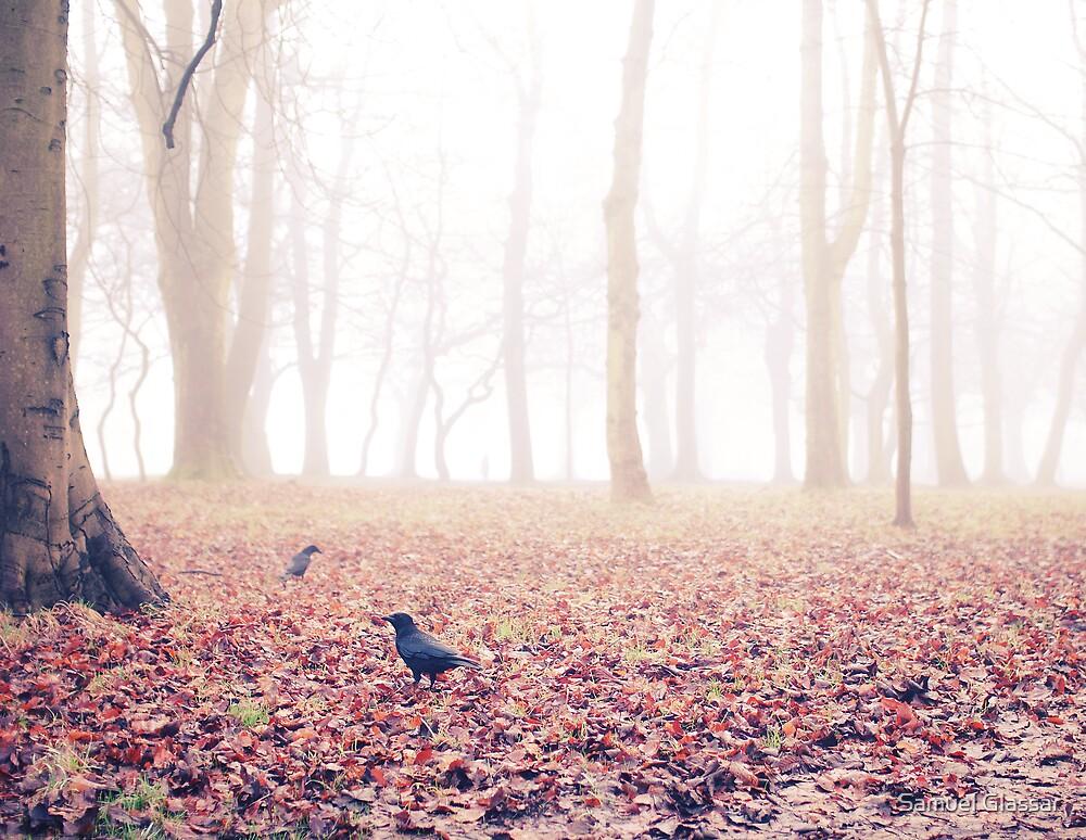 Old crow by Samuel Glassar
