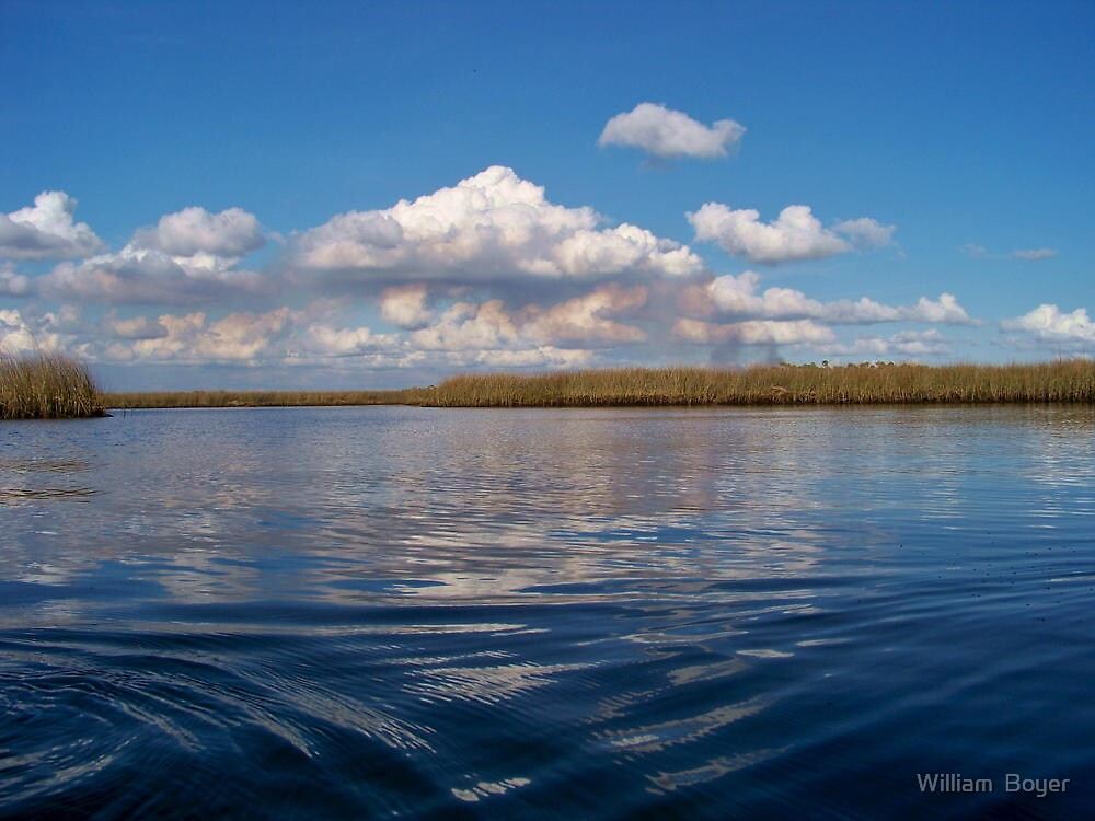Sawgrass and clouds by William  Boyer