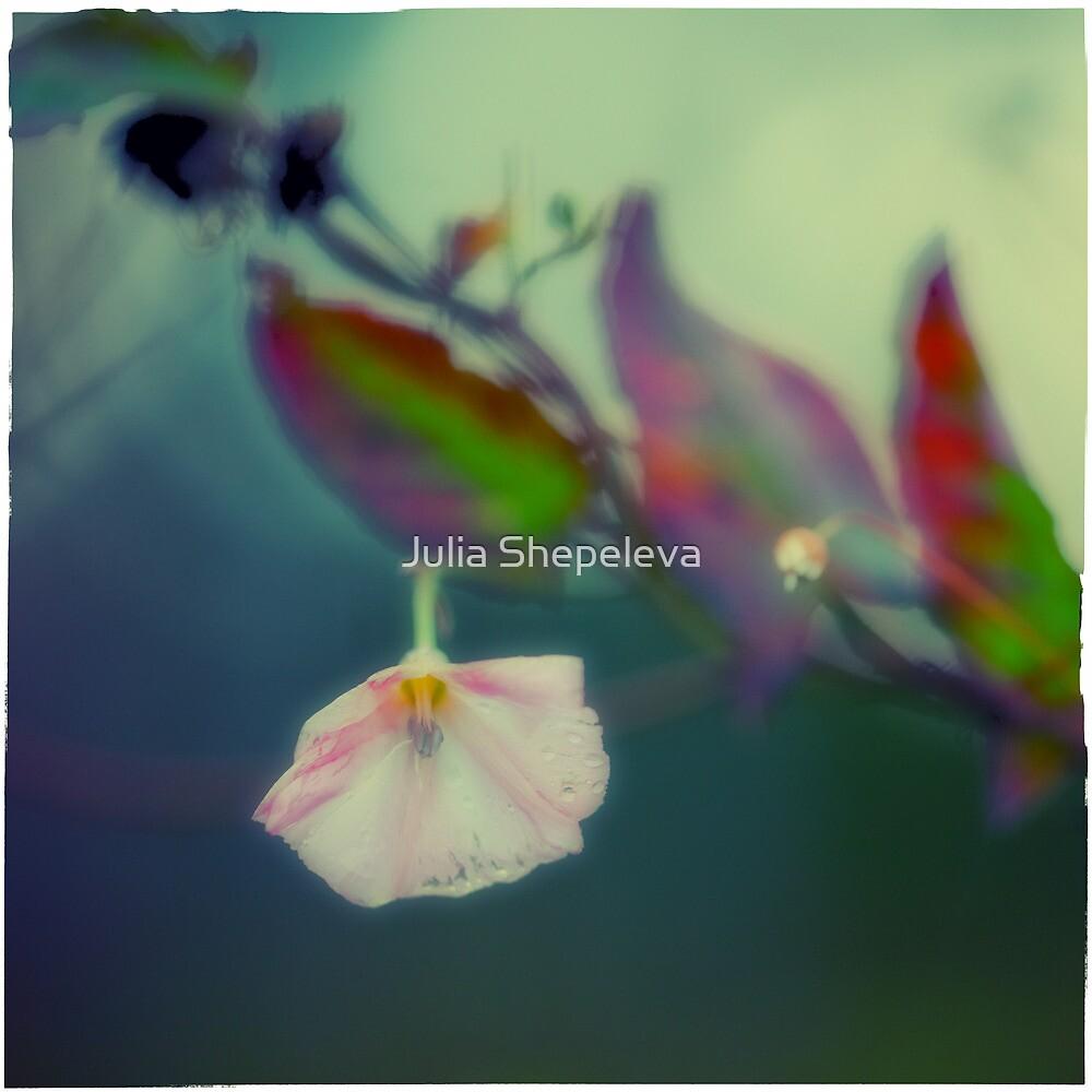Field Bindweed by Julia Shepeleva