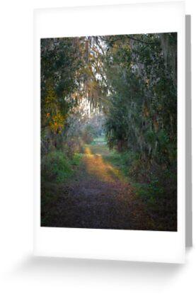 The Path by dhmielowski
