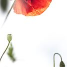 Opium Sky by MorganaPhoto